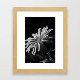Daisy At Night Framed Art Print