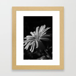 Daisy At Night Framed Art Print