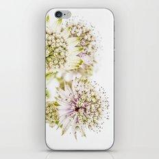 Astrantia major iPhone & iPod Skin