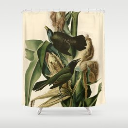 Purple Grackle or Common Crow Blackbird (Quiscalus quiscula) Shower Curtain