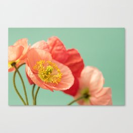 Pastel Poppy #1 Canvas Print