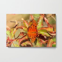 Butterfly In The Glades - Gulf Fritillary Metal Print