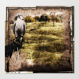 falcon hunt, or freedom to fly Canvas Print