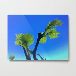 Spring Growth on the Grapevine Metal Print
