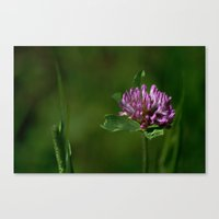 clover Canvas Prints featuring Clover by Dorothy Pinder