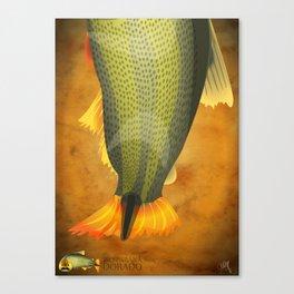 Dorado - Paraná River Fish Canvas Print