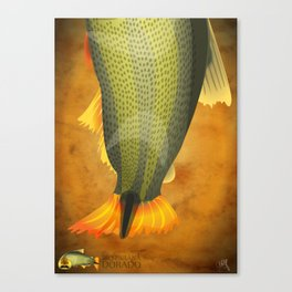 Dorado - Paraná River Fish Canvas Print