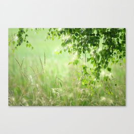 #nature #Birch #leaves with #Green #Grass #beautiful #homedecors Canvas Print