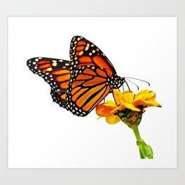 Monarch Butterfly on Zinnia Flower Art Print