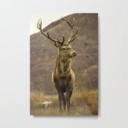 Red Deer Stag in Autumn Metal Print