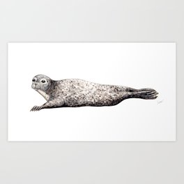 Harbour Seal Art Print
