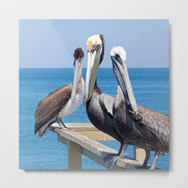 Larry, Curly and Moe Pelicans Metal Print