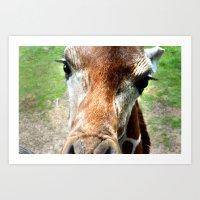 Giraffe Close Up Art Print