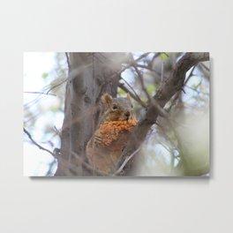Chicken Strip Squirrel Metal Print
