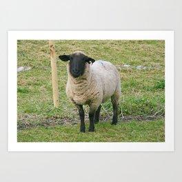 Hore Abby, Ireland ~ Mr.Sheep Art Print