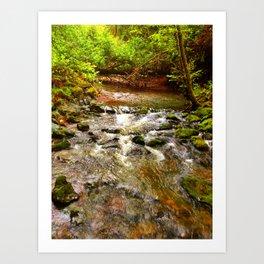 Motion in Muir Woods Art Print