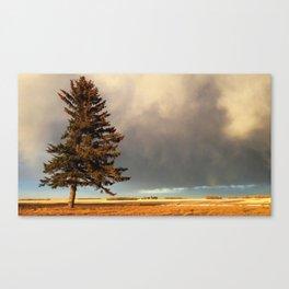 Alone at Dusk Canvas Print