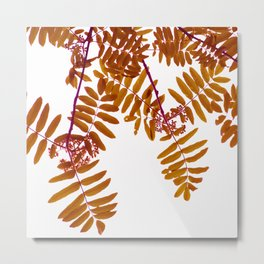 Fall Color Leaves White Background #decor #society6 #buyart Metal Print