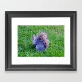 Squirrel 2 Framed Art Print