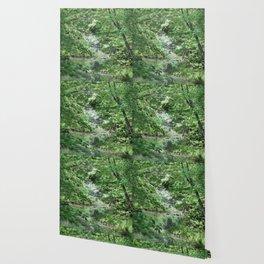 Hidden Creek Wallpaper