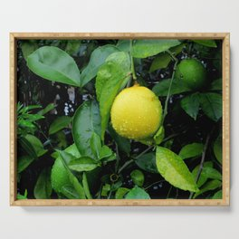 The Lemon Serving Tray