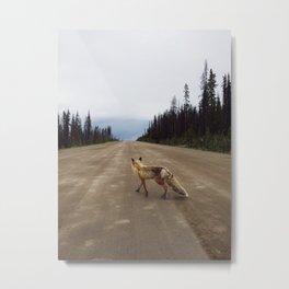 Road Fox Metal Print