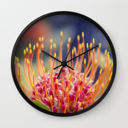 Tropical Sunburst - Leucospermum Pincushion Protea Flower Wall Clock