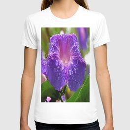 Morning Glory Petals and Dew Drops Vector T-shirt