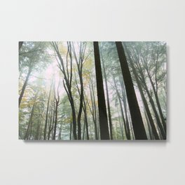 Foggy Forest Print Metal Print