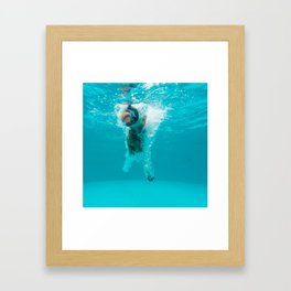 Shark Alert Framed Art Print