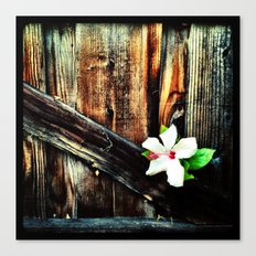 Old wood and a flower. Canvas Print