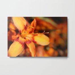 Hansville, WA- Orange Flowers Metal Print