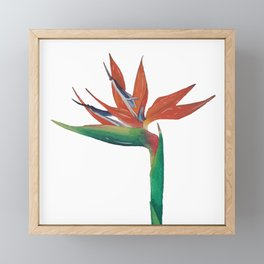 The Bird of Paradise Framed Mini Art Print