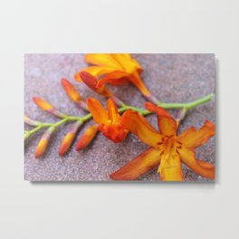 Orange Flower Metal Print