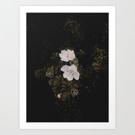 Illustrated Series - New Zealand Flora Art Print