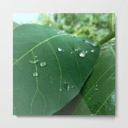 raindrop 5 photography Metal Print