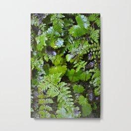 Where Ferns Grow Metal Print
