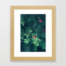 Autumn silance Framed Art Print