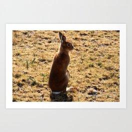 Irish Mountain Hare Art Print