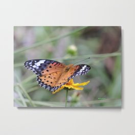 Indian Fritillary in Hangzhou Metal Print