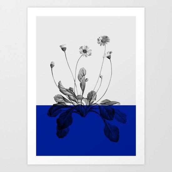 blue flower plant nature Art Print