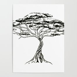 Whistling Thorn , Zen Bonsai African Tree Poster