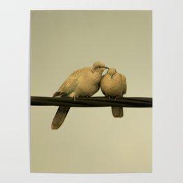 loving doves Poster