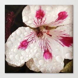 Flowers in the Summer Rain Canvas Print