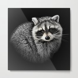 A Gentle Raccoon Metal Print