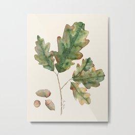 Oak tree  green leaves  Metal Print