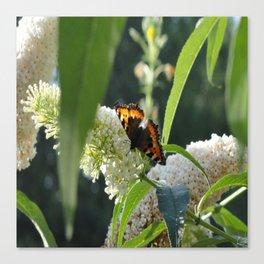 Small Tortoiseshell Butterfly Canvas Print