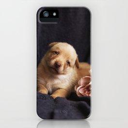 Australian kelpie puppy with rose iPhone Case