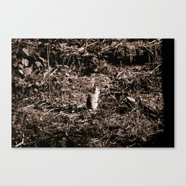 Rabbit of Formby Woods Canvas Print