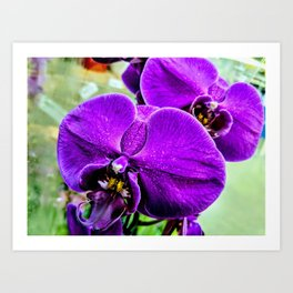 Purple Orchids III Art Print